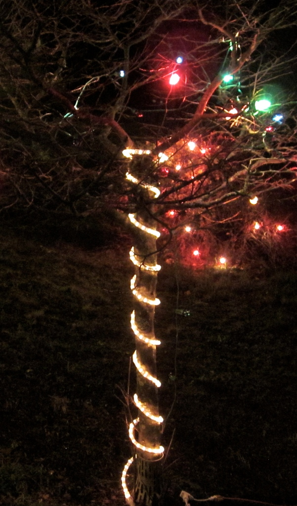 Christmas lights, We(s)t Coast style. (credit: own photo)