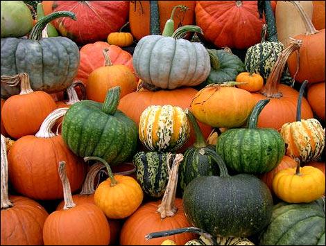 Pumpkin diversity. (credit: thepeachtreefarm.com)